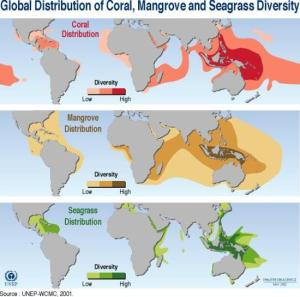 distribution_of_coral_mangrove_and_seagrass_diversity2