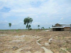 kondisi-hutan-alam-produksi-yang-masih-bagus-digantikan-dengan-hutan-tanaman-bingung-1