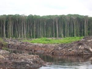 kondisi-hutan-alam-produksi-yang-masih-bagus-digantikan-dengan-hutan-tanaman-bingung-17