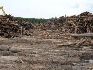 kondisi-hutan-alam-produksi-yang-masih-bagus-digantikan-dengan-hutan-tanaman-bingung